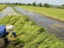 EU rice farmers urge to reduce import from some countries