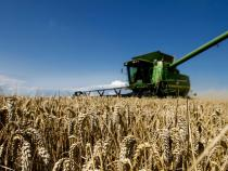 Poland's wheat exports almost doubled in 2014