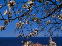 Slovenia: tourism is growing, up 40% from non-EU countries