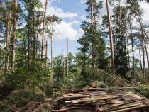 Poland needs until 2019 to clear trees felled by heavy wind